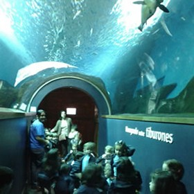 what to do to see in seville children acuario de seville